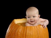 Bebé de la calabaza Foto de archivo