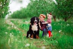 Bebé de la mujer con el perro Berna en jardín de la primavera Imagenes de archivo