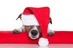 Bebé de santa del perro de la Navidad Foto de archivo