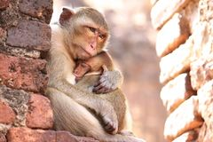 Bebé del abrazo del mono de la madre foto de archivo