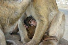 Bebé del mono imagen de archivo libre de regalías