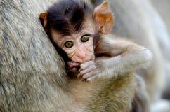 Bebé del mono Fotografía de archivo