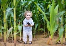 Bebé divertido y ocultación en un campo de maíz Imagen de archivo