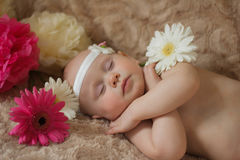 Bebé durmiente en las flores Fotografía de archivo libre de regalías