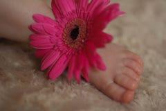 Bebé durmiente en las flores Foto de archivo libre de regalías