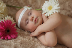 Bebé durmiente en las flores Fotos de archivo
