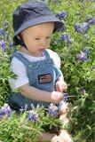 Bebé en Bluebonnet2 fotografía de archivo libre de regalías