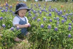 Bebé en Bluebonnets imagen de archivo libre de regalías