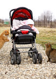 Bebé en cochecito de niño y dos gatos Fotos de archivo