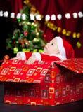 Bebé en el traje de la Navidad que mira para arriba Imágenes de archivo libres de regalías