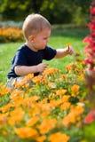 Bebé en flores Fotografía de archivo libre de regalías