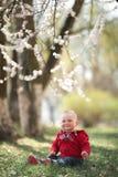 Bebé en jardín floreciente del albaricoque Fotografía de archivo libre de regalías