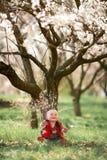Bebé en jardín floreciente del albaricoque Imagen de archivo libre de regalías