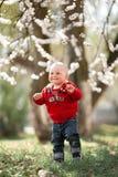 Bebé en un paseo en jardín floreciente del albaricoque Foto de archivo libre de regalías