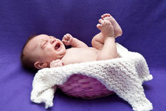 Bebé gritador en cesta Fotos de archivo