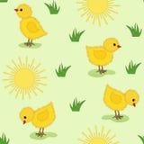 Bebé inconsútil. Pollos y sol. Fotografía de archivo