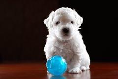 Bebé-Perro imagen de archivo