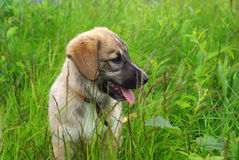 Bebé-perro lindo en hierba fotografía de archivo