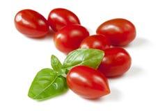 Bebé Plum Tomatoes con Basil Isolated Fotografía de archivo