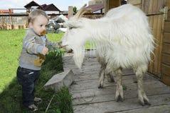 Bebé que introduce una cabra Imagen de archivo