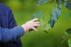 Bebé que lleva a cabo la rama del árbol Fotografía de archivo