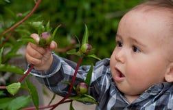 Bebé que mira la flor Foto de archivo libre de regalías