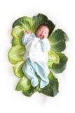 Bebé recién nacido en hojas de la col Fotografía de archivo