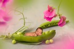 Bebé recién nacido en vaina de guisante imagen de archivo