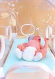 Bebé recién nacido que miente dentro de la incubadora infantil en hospital Imagenes de archivo
