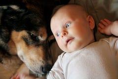 Bebé recién nacido que pone con el pastor alemán Dog del animal doméstico Imagen de archivo libre de regalías