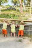 Bebé tres que mira a través de la cerca en las gallinas y los gallos en el gallinero Las camisas amarillas imágenes de archivo libres de regalías