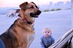 Bebé y el perro Fotografía de archivo libre de regalías