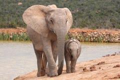 Bebé y madre del elefante fotos de archivo libres de regalías
