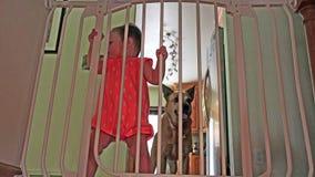 Bebé y perro detrás de barras de seguridad en las escaleras almacen de metraje de vídeo
