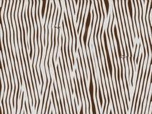 Bebê animal da zebra da textura da pele Foto de Stock Royalty Free