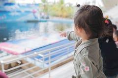 Bebê asiático que aprecia para ver o golfinho mostrar Fotografia de Stock Royalty Free