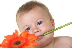 Bebê bonito com a flor nos dentes Fotos de Stock Royalty Free
