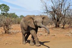 Bebê bonito do elefante imagem de stock