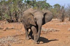 Bebê bonito do elefante foto de stock royalty free
