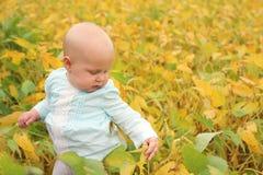 Bebê bonito fora na natureza da queda Fotografia de Stock