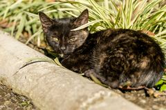 Bebê Cat Under da concha de tartaruga o Sun imagens de stock royalty free