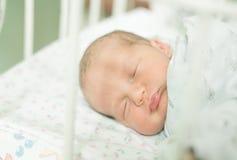 Bebê cinco dias velho Foto de Stock Royalty Free