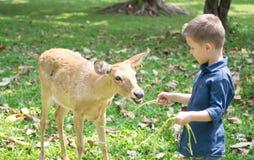 Bebê com cervos imagens de stock royalty free