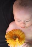 Bebê com flor Fotos de Stock