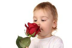 Bebê com rose2 Imagens de Stock Royalty Free