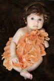 Bebê da flor imagem de stock