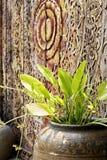 Bebê da lama de Texas no frasco da água no fundo de madeira, conceito de Imagem de Stock Royalty Free