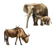 Família do elefante: mãe e bebê. bebê. Wildebeest com os pássaros em sua parte traseira. Imagem de Stock Royalty Free