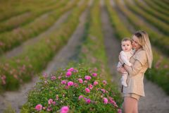 Bebê da terra arrendada da mulher no campo completamente de arbustos de rosas Estação de verão motherhood Tempo da família imagens de stock