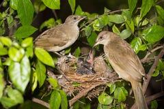 Bebê de alimentação da mãe do pássaro na natureza da floresta imagem de stock royalty free